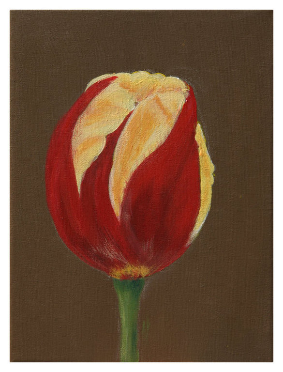 Tulp Rood Geel op Bruin